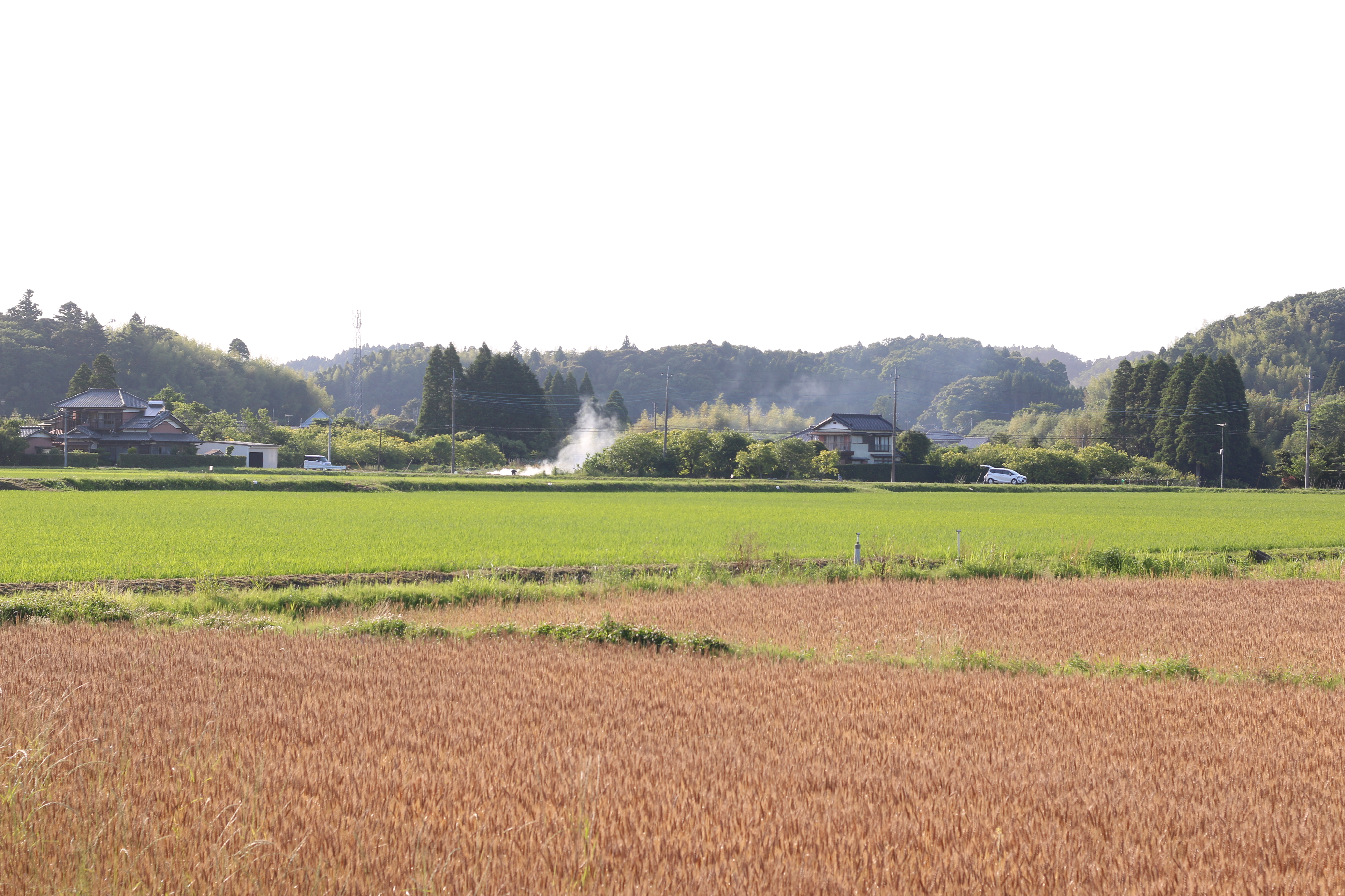 麦畑と田んぼの風景