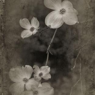 Five Blooms