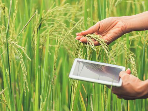 A Lei do Agro (Lei n°. 13.986/20) e seu impacto sobre a produtividade do setor agrário brasileiro
