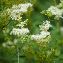 flower-5457754_1920.jpg