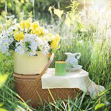 daisies-1466851_1920.jpg
