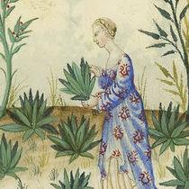 Herbalista - Medieval illustration.jpeg