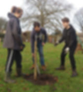 Orchard Planting Gets Underway