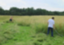 Scything of the Kings Cliffe meadow