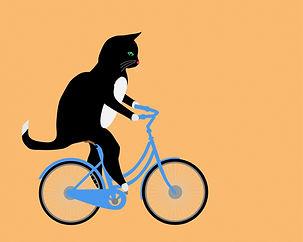 Cat Riding Bicycle.jpg