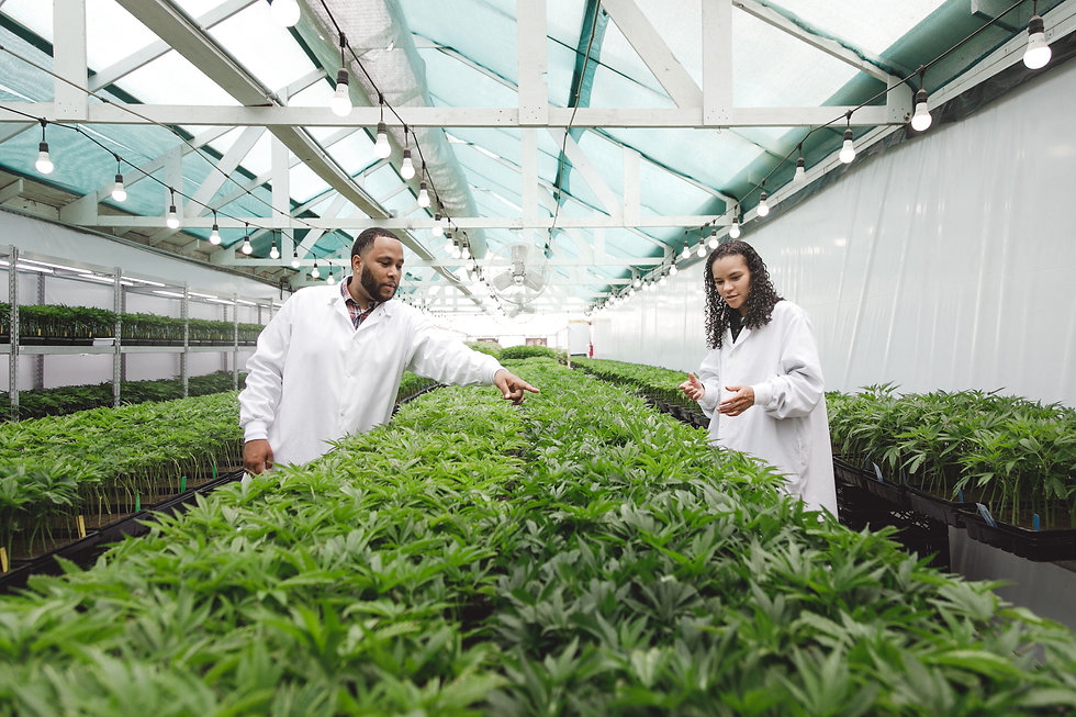 MD Numbers, Inc. a family of vertically integrated cannabis brands based in California
