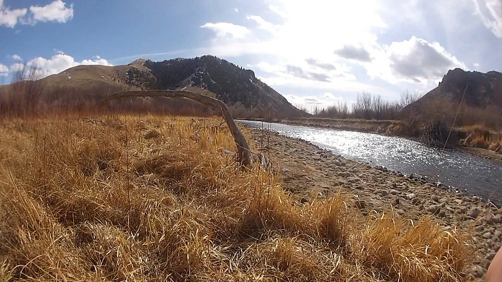 We fly fished this area just south of Dillon Montana on the Beaverhead River
