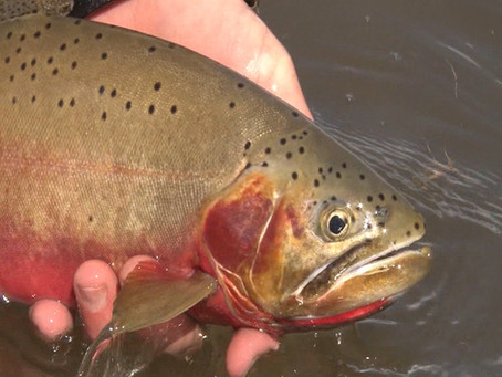 Fly Fishing Montana: Goose Lake