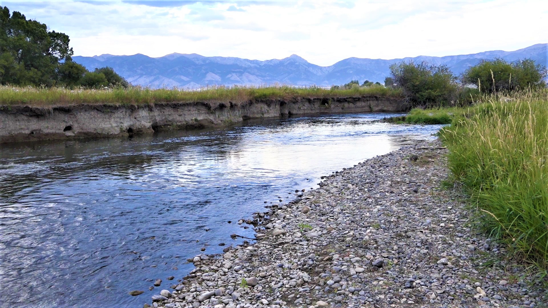 Fly Fishing Montana Bozeman Area River A