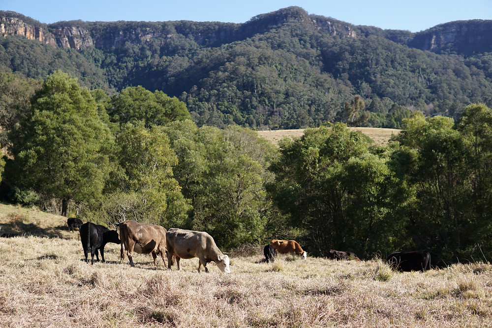 farmstay kangaroo valley