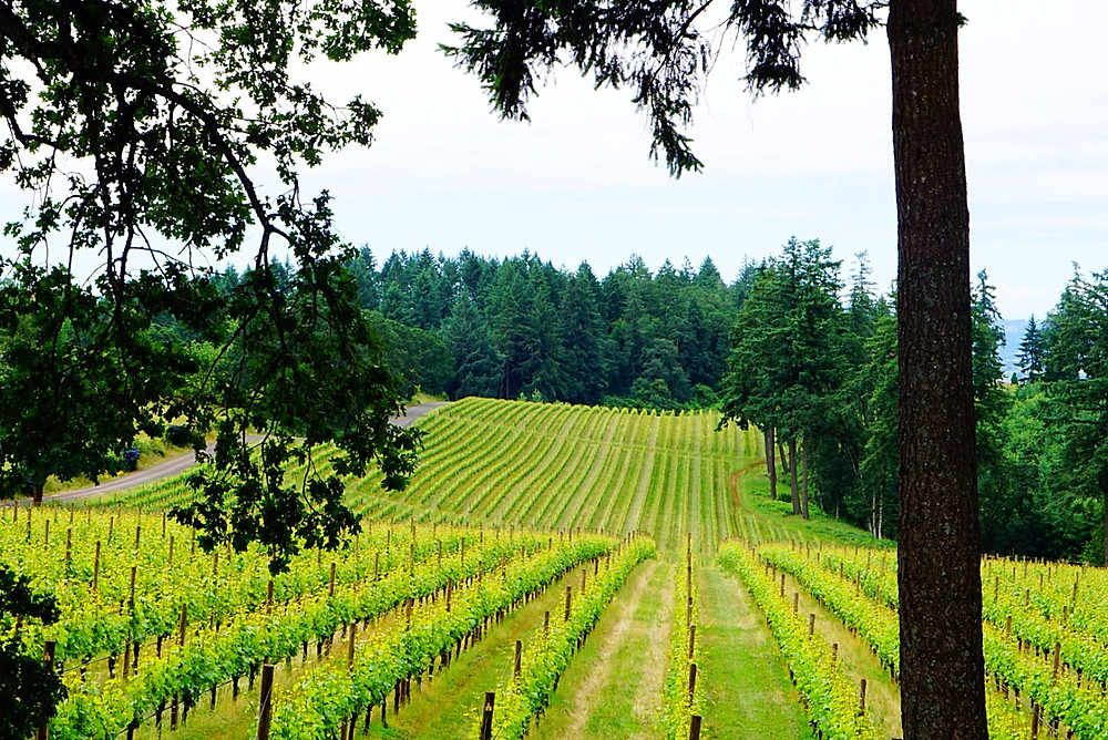 salem oregon wine tasting