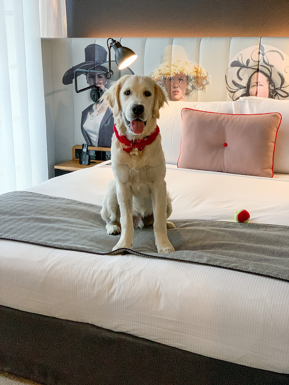 pet friendly things to do in sydney