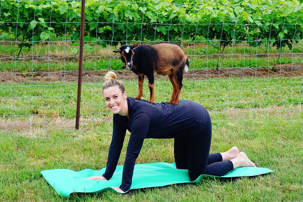 goat yoga blog