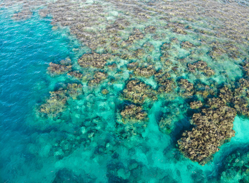 a guide to cairns & the great barrier reef