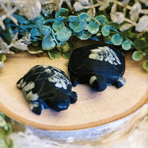 Chrysanthemum Tortoise for Life Purpose Meaning & Patience