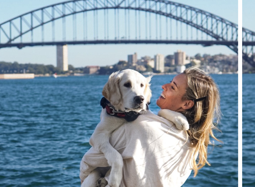 a dog friendly staycation guide to sydney's woolloomoolloo