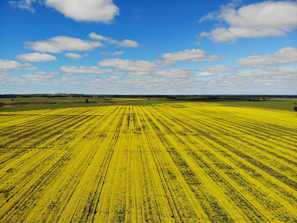 victoria australia flower fields
