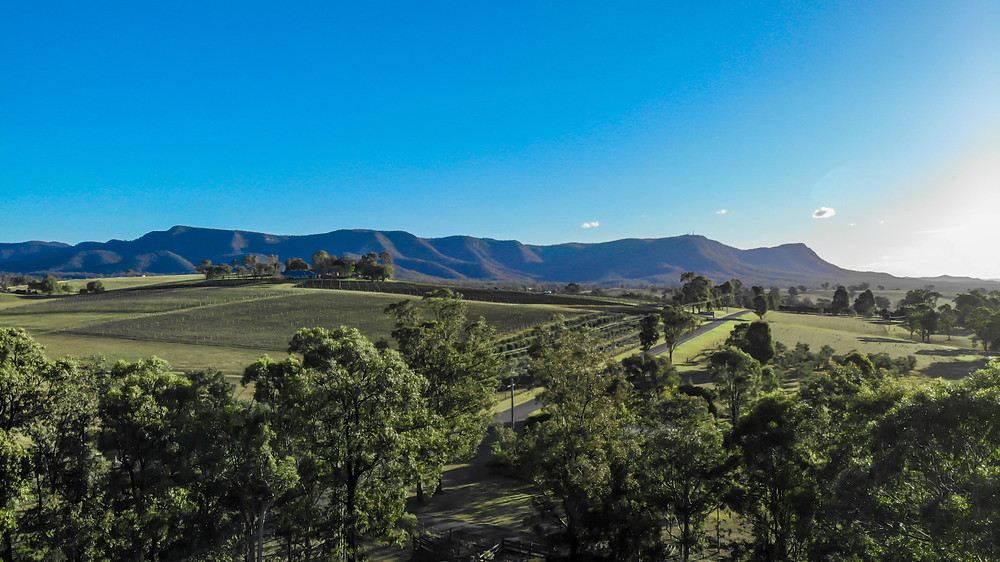 best wineries in hunter valley