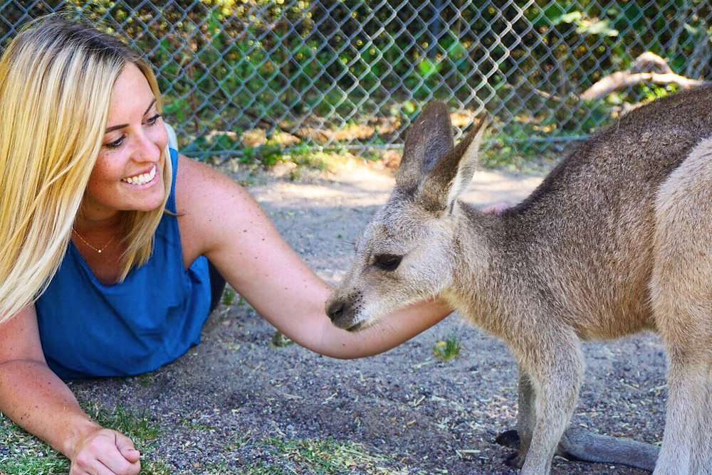 best place to see kangaroos sydney