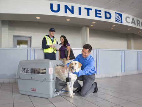 United Please Re-Open the PetSafe Travel Program!