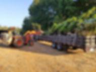 Loading Trees.jpg