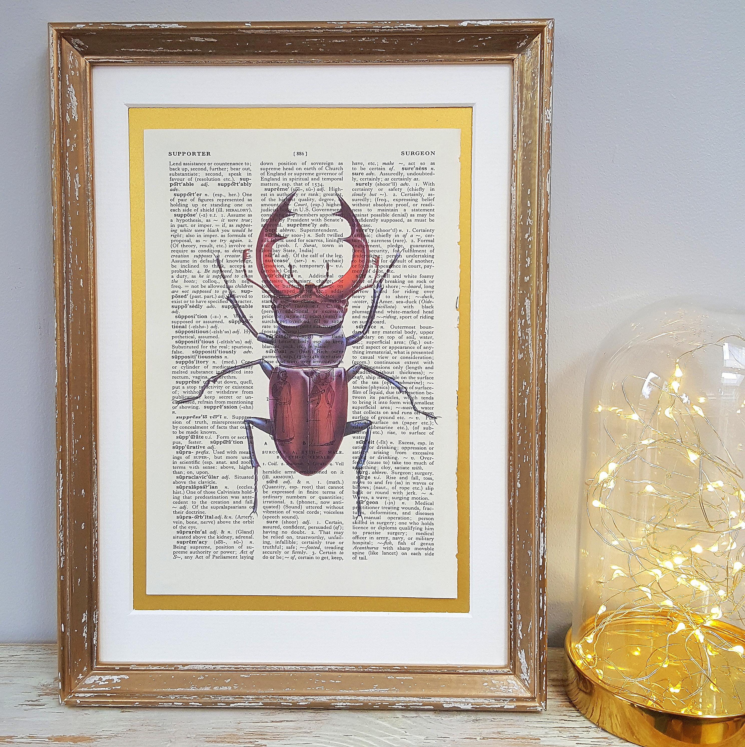 Stag Beetle Print