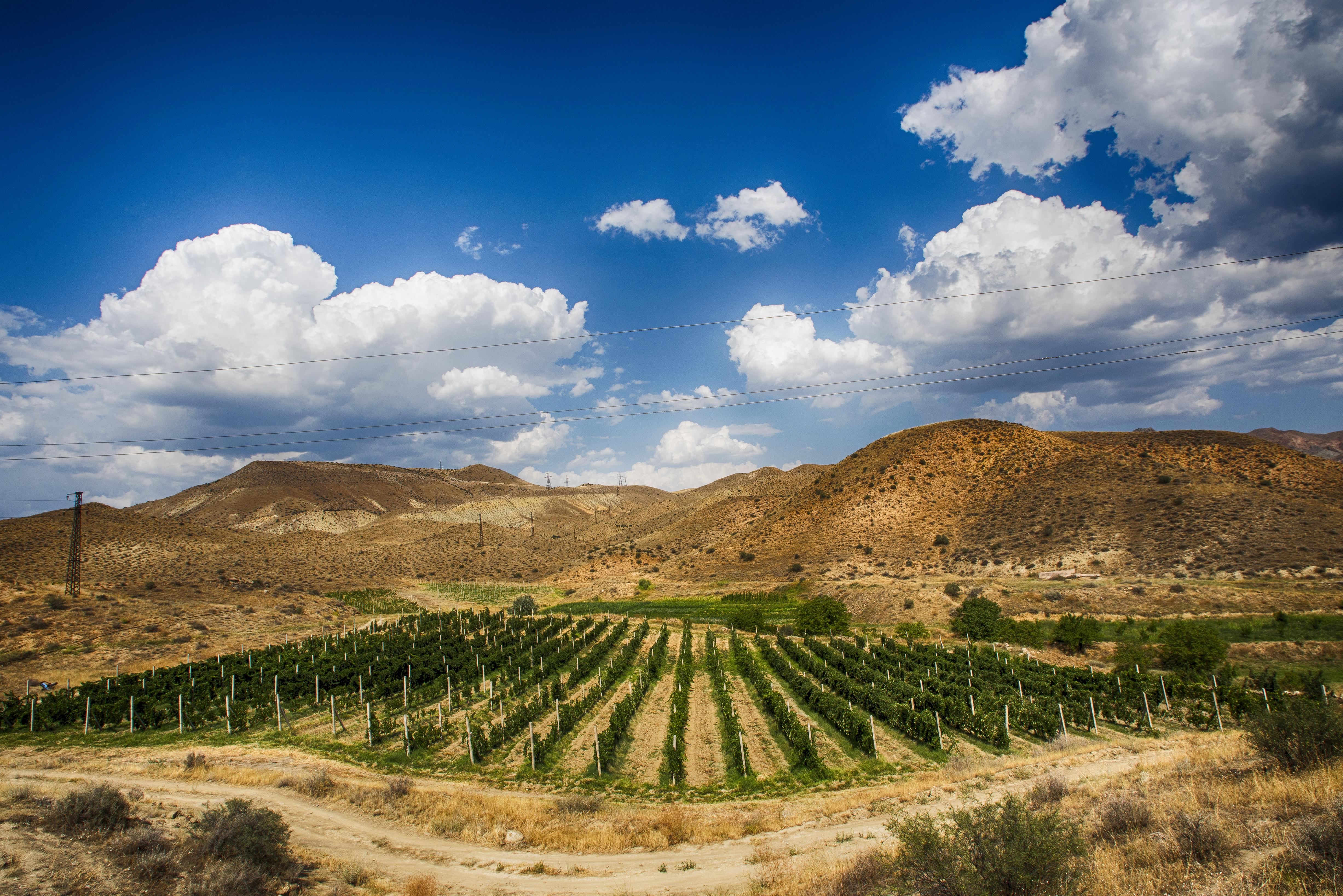 Our vineyards in Arpi village