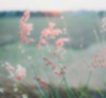 rosa gras.jpg