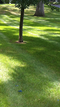 clarkston waterford lawn care