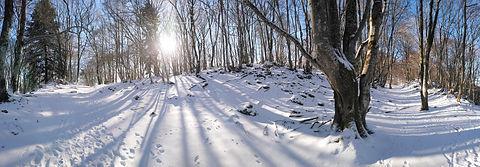 ruchers-hiver.jpg