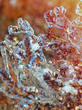 plante_glacé.jpg