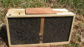 Acompte Paquet d'abeilles 1,5 kg + Reine fécondée