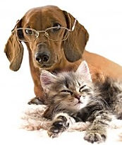 Dachshund wearing glasses with kitten