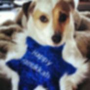 hanukkah-dogs-05.jpg