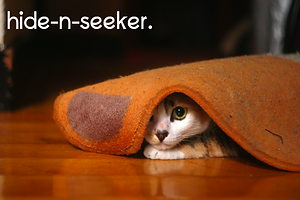 Hickory Ridge Animal Hospital Hide-n-seeker cat