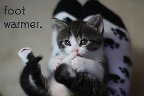 Hickory Ridge Animal Hospital Foot Warmer Kitten