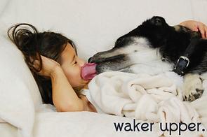 Hickory Ridge Animal Hospital Waker Upper Dog