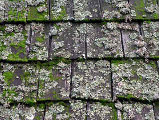 L9 Detailing and Pressure Washing 101 - (Reasons to Clean Your Roof)