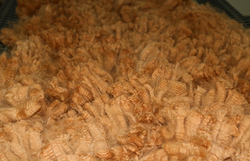 Cria fleece, 2019