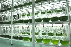 BGG Lab (7)