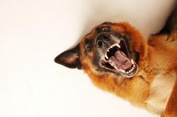 dog-684036_1920