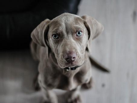 飼い犬に対しマイクロチップ装着費用の補助が受けられます