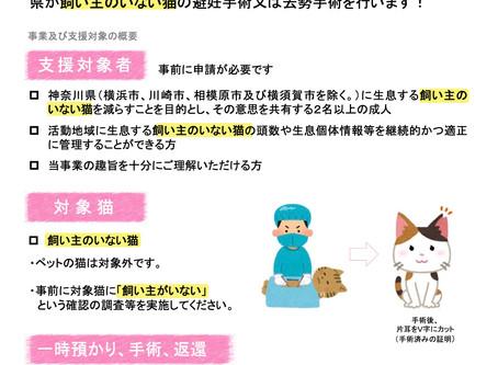 県が飼主のいない猫(地域猫)の不妊手術を行います