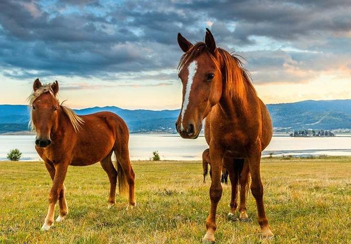 Bild_Pferd.jpg