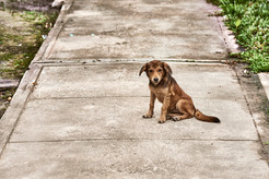 One of the local dogs in the Mishana Community - Plant Spirt Healing in the Amazon Rainforest with Casa Galactica