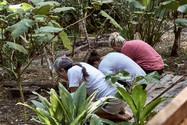 Participants Taking Part in a Sangre De Grado Purgative - Ayahuasca Plant Spirit Healing Retreat & Noya Rao Initation Dieta - Casa Galactica