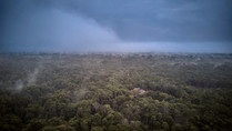 Ayahuasca Retreats - Deep in the Jungle - in the Allpahuayo-Mishana National Reserve - Chamisal Healing & Retreat Center