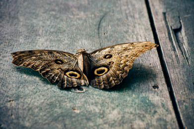 Butterfly in the Amazon Jungle - Noya Rao is Often Symbolised With Butterflies - Casa Galactica