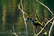 Amazing Wildlife on the Banks of the Nanay River in the Mishana Community - Casa Galactica Ayahuasca Retreats + Noya Rao Dietas