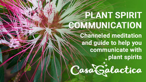Plant Spirit Communication : How to Easily and Effectively Communicate With Plant Spirits